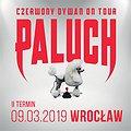 Paluch - Wrocław II termin
