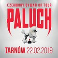 Koncerty: Paluch - Tarnów, Tarnów