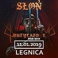 Słoń - Legnica
