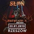 Słoń - Rzeszów
