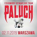 Paluch - Warszawa