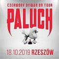 Hip Hop / Reggae: Paluch - Rzeszów, Rzeszów