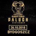 Paluch - Bydgoszcz