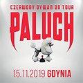 Hip Hop / Reggae: Paluch - Gdynia, Gdynia