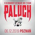 Hip Hop / Reggae: Paluch - Poznań, Poznań